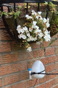Mark Tebbutt's Air Quality Egg with a gas diffusion tube attached, hanging from a flower basket, July 2013